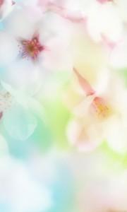 oboi-8-marta-lumia-10